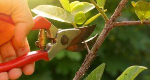 قیچی باغبانی